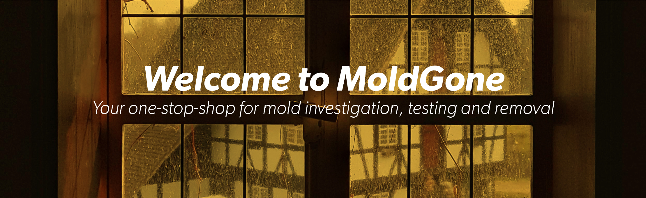 mold removal dc